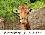 a beautiful portrait of a... | Shutterstock . vector #1176251557