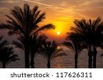 The Sun Rising Over Palm Trees...