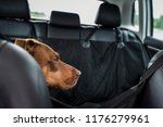 two tone brown dog riding in... | Shutterstock . vector #1176279961