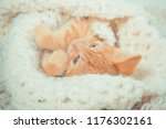 Stock photo little red kitten cat lies on the fluffy carpet at home little kitten sleeps close up of a 1176302161