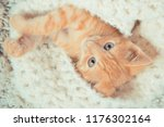 Stock photo little red kitten cat lies on the fluffy carpet at home little kitten sleeps close up of a 1176302164