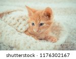 Stock photo little red kitten cat lies on the fluffy carpet at home little kitten sleeps close up of a 1176302167