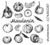 mandarin orange set. ink sketch ... | Shutterstock .eps vector #1176302287