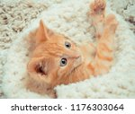 Stock photo little red kitten cat lies on the fluffy carpet at home little kitten sleeps close up of a 1176303064