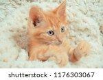 Stock photo little red kitten cat lies on the fluffy carpet at home little kitten sleeps close up of a 1176303067