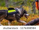 hunting dog seeking prey in the ... | Shutterstock . vector #1176308584