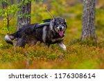hunting dog seeking prey in the ... | Shutterstock . vector #1176308614