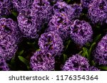 a beautiful close up photo of...   Shutterstock . vector #1176354364
