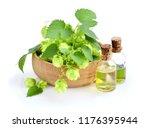hop cones  humulus  with... | Shutterstock . vector #1176395944