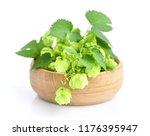 hop cones  humulus  on a wooden ... | Shutterstock . vector #1176395947