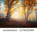 fairy autumn forest with trail... | Shutterstock . vector #1176422404