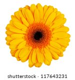 Large Yellow Orange Gerbera...