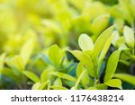 nature fresh green leaf plant... | Shutterstock . vector #1176438214