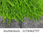 green plant and cement footpath ... | Shutterstock . vector #1176462757
