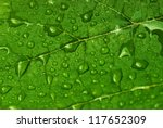 Green Leaf With Water Drops...