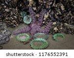 A Purple Starfish And Green Se...