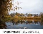 golden autumn reeds. bright...   Shutterstock . vector #1176597211