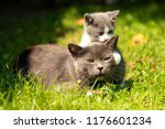 Family Of Cats Outdoor. Cat...
