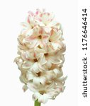 flowers in hd with white... | Shutterstock . vector #1176646414