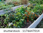 urban gardening with raised beds | Shutterstock . vector #1176647014