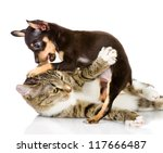 Stock photo the cat fights with a dog isolated on white background 117666487