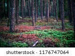 pine tree forest with red and... | Shutterstock . vector #1176747064