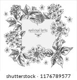 realistic botanical ink sketch...   Shutterstock .eps vector #1176789577
