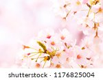 cherry blossoms image with copy ... | Shutterstock . vector #1176825004