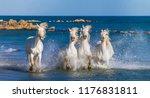 white camargue horses galloping ... | Shutterstock . vector #1176831811