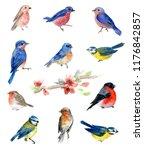 watercolor birds  collection of ... | Shutterstock . vector #1176842857