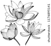 vector lotus flower. floral... | Shutterstock .eps vector #1176895141