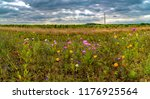 panoramic view of a field of... | Shutterstock . vector #1176925564
