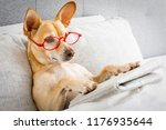 dog in bed resting and reading... | Shutterstock . vector #1176935644