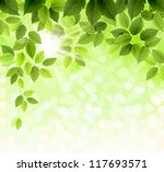 summer branch with fresh green... | Shutterstock .eps vector #117693571