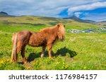 icelandic horse on a summer...   Shutterstock . vector #1176984157