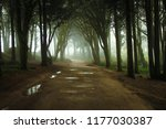 path in a forest covered with... | Shutterstock . vector #1177030387