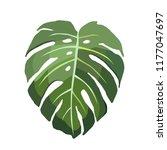 monstera vector leaf... | Shutterstock .eps vector #1177047697