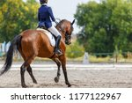 Stock photo young girl on bay horse performing her dressage test 1177122967