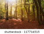 beautiful landscape image of... | Shutterstock . vector #117716515