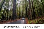 redwood forest  california usa  ...   Shutterstock . vector #1177174594