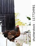 Little Partridge Cochin Hen...