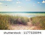 beach grasses on the seashore   Shutterstock . vector #1177320094