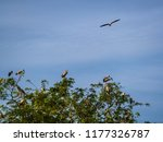 the egret perched on tree size. | Shutterstock . vector #1177326787