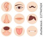 human nose  ear  mouth mustache ... | Shutterstock .eps vector #1177447624