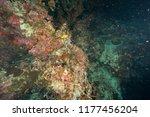 deep underwater world | Shutterstock . vector #1177456204