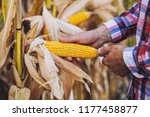 a young agronomist checks the... | Shutterstock . vector #1177458877