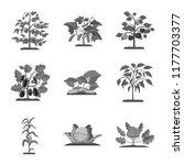 vector design of greenhous and... | Shutterstock .eps vector #1177703377