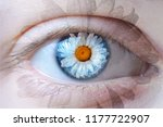 human face with chamomile... | Shutterstock . vector #1177722907