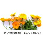 calendula flowers isolated on... | Shutterstock . vector #1177750714