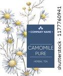 tea sticker. herbal tea.... | Shutterstock . vector #1177760941